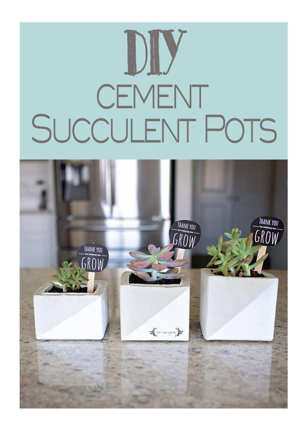 Cement Succulent Flower Pot Teacher Gift | Five Marigolds