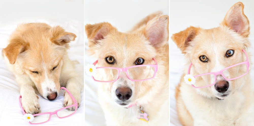 5 Tips for Photographing Dogs | Five Marigolds #FeedDogsPurina #ad